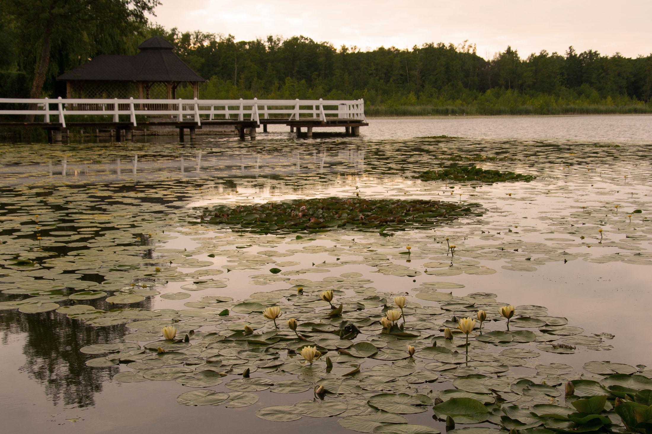 Wolsztyn – jezioro